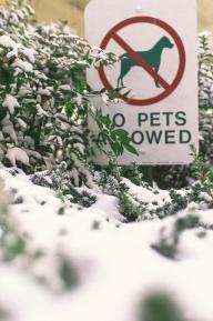 JT-SnowDays-1444